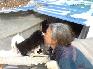 Woman Saves Hundreds of Dogs From Being Eaten in South Korea