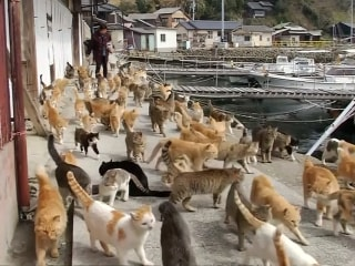 'Cat Island': Felines Outnumber Humans on Japan's Aoshima Island