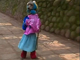 Dog in a Dress Goes for a Walk - on Hind Legs