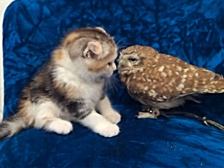 The Owl and the Pussycat: An Unusual Friendship Develops