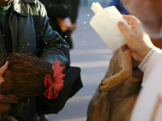 Watch Pets Receive Special Blessing for St. Anthony's Day