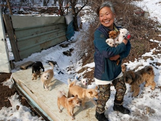 One-Woman Dog Shelter Saves Lucky Pooches from the Pot