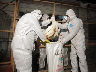 Canadian Infected With Deadly Strain of Bird Flu