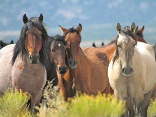 Mustang Monument's Wild Horses Ready to Welcome Luxury Travelers