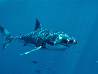 Are Shark Attacks Really on the Rise?
