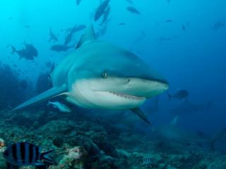 Texas Man Never Surfaced After Bahamas Shark Dive