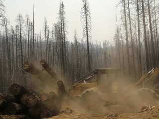 California Forests Hit by Huge Rim Fire Will Be Logged
