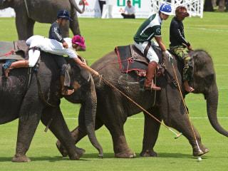 Elephants Play Polo