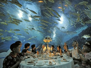 Under the Sea: Tourists Have Fish Over Dinner