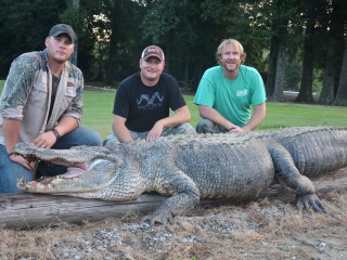 792-Pound Alligator Breaks State Hunting Record in Mississippi