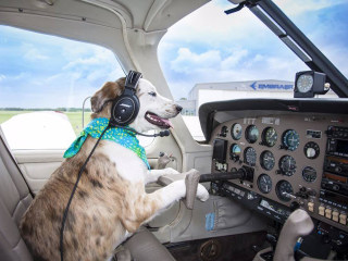 Group Pairs Pilots With Pooches to Fly Them to 'Forever Homes'