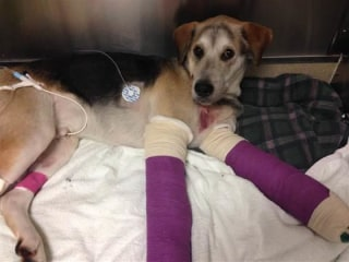 'It's a Miracle': Dog Survives 150-Foot Fall Into an Oregon River