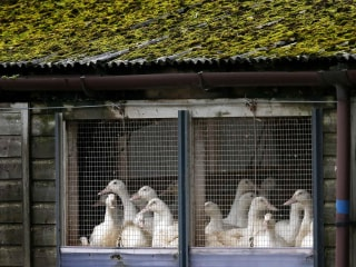 Bird Flu Mutating in China, Threatens Pandemic