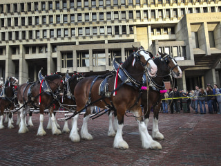Budweiser Gives Clydesdales the Heave-Ho for the Holidays