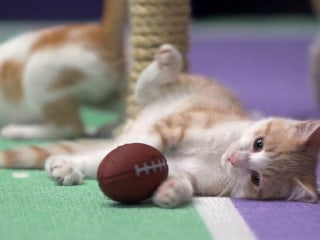 Su-Purr Bowl! Kitten Bowl Cats Visit TODAY