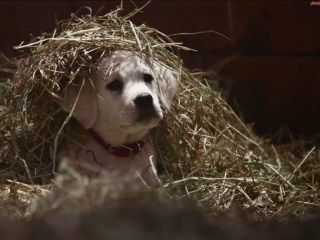 The 7 Most Moving Super Bowl XLIX Ads to Watch