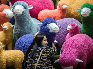 Chinese New Year: What Will Year of the Sheep Bring?