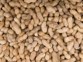 Skin Patch May Protect Against Life-Threatening Peanut Allergy