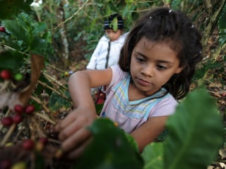 Child Workers, Other Labor Violations Found in Honduras by U.S.