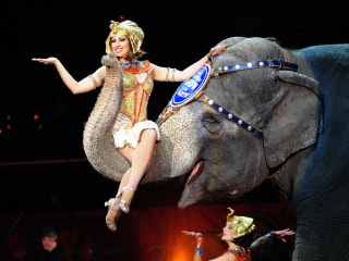 Ringling Bros. and Barnum & Bailey Circus Phasing Out Elephant Acts