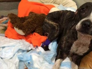 Cabela, Dog Rescued From Florida Railroad Tracks, Treated for Shock