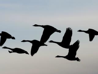 Wisconsin Declares Bird Flu Emergency