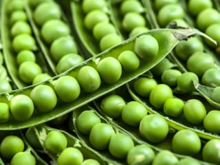 Pea Protein: Is It the New Soy?