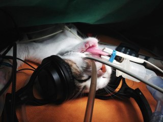 I Can Haz Mozart? Classical Music Purrfect for Calming Cats