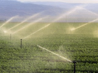 California Imposes Unprecedented Statewide Water Restrictions