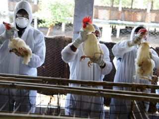 New Bird Flu Virus Kills Woman in China