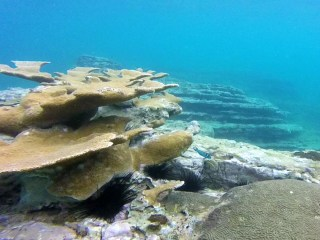 Caribbean Economies Face Peril as Coral Reefs Decline