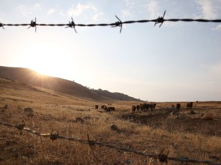Coping with Drought in California's Farm Country