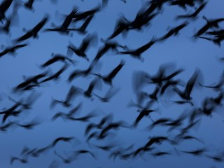 New York State to Turn The Lights Off For Migrating Birds