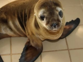 17 Sea Lions Poisoned by Chlorine at California Marine Rescue Center