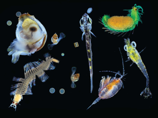 Fantastic Voyage Finds a Carnival of Creatures in the Ocean's Microcosm