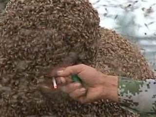 Watch Man Get Covered in 240 Pounds of Bees