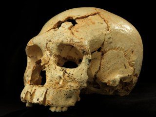 430,000-Year-Old Murder Mystery: Broken Skull Hints at Earliest Homicide