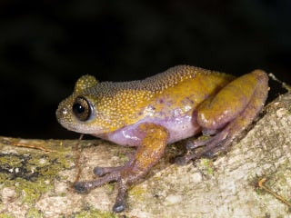Color-Changing Frog, Dementor Wasp Among 139 New Species Found in Mekong