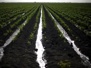 Job and Revenue Losses Mount From Parched California Farms