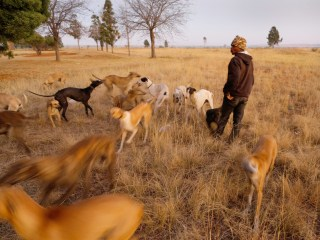 Traditional Dog Hunting in South Africa Faces Growing Controversy
