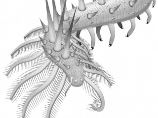 30-Legged Prehistoric Worm Among First to Sport Spikes