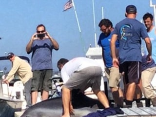 Dolphin Leaps Into Family's Boat, Breaks Mom's Ankles
