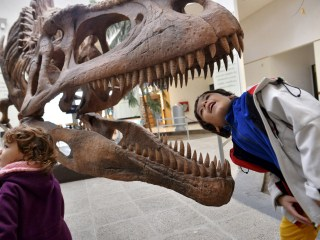 Toothy Terror: Dinosaurs Like T. Rex Had Unique Serrated Teeth