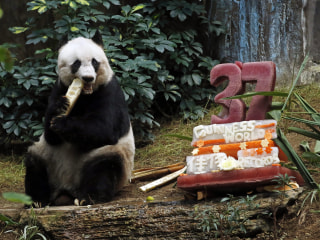 Happy Birthday, Jia Jia: World's Oldest Giant Panda Turns 37