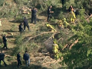 Two Kids Critically Hurt After Tree Falls Outside California Museum