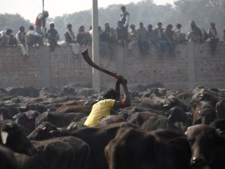 Nepal Will No Longer Host World's Largest Religious Animal Slaughter
