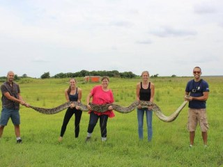 18-Foot Python Captured in Florida Everglades