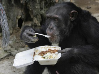 No, Chimpanzees Aren't 'Legal Persons,' New York Judge Rules