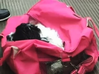 Puppy Stolen at Knife-Point on Train