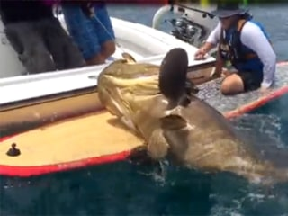 Ben Chancey, Florida Man, Hooks 412-Pound Grouper on Paddle Board